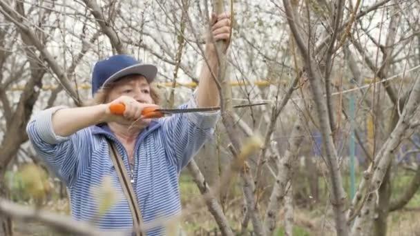 Alte Frau Gärtner Sägen von Ästen während Frühling Garten arbeiten