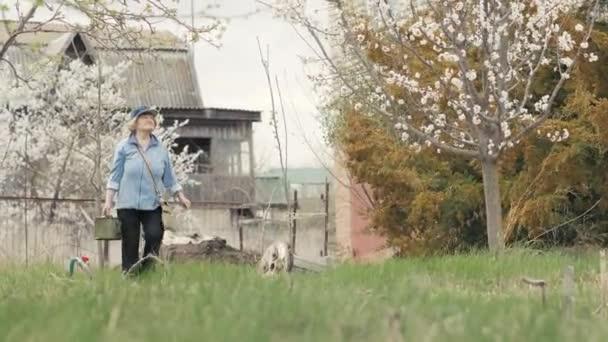 Zahradníka žena zalévání kvetoucí jabloň od zalévání pot při zahradničení