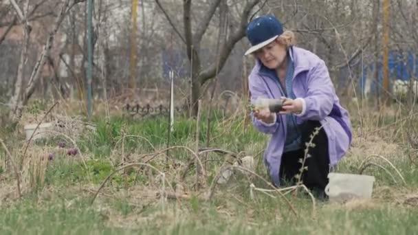 Zahradníka žena přesazování sazenice květin v zemi na venkově garde