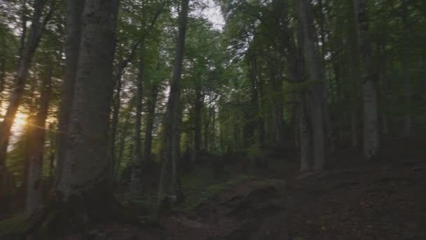 Hlediska zelené letní les a jasného slunečního světla mezi stromy