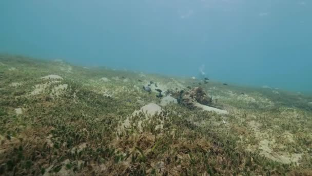 Fish swimming on seabed underwater view. Scuba diver floating underwater