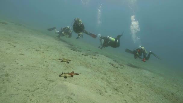 Gruppo di subacquei nuotare sotto lacqua di mare e guardare seastars sul fondo