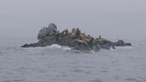 Group sea lions on rocky cliff and birds flying over ocean water