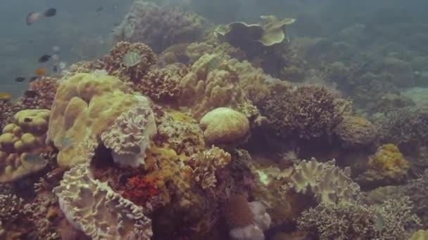 Bella barriera corallina sul fondo del mare e pesci che nuotano in acqua trasparente
