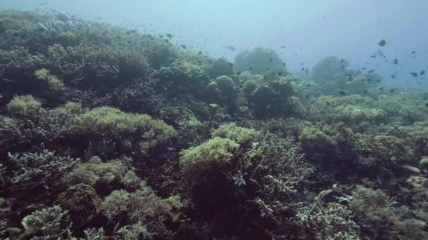 Little fish swimming over coral reef and seaweed on sea bottom underwater view