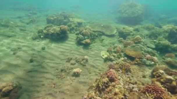 Beautiful coral reef and fish swimming in clear water in blue sea. Woman snorkeling in mask and snorkel. Underwater view while snorkeling in ocean. Beaituful marine life.