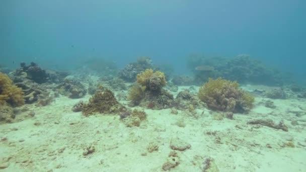 Barevné tropické ryby plavání přes korálový útes na mořském dně pod vodou pohled. Podvodní svět moře během potápění a šnorchlování. Svět pod vodou oceánu, exotických ryb a korálové útesy.