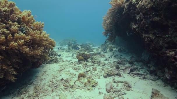Multicolori pesci nuotare sopra la barriera corallina tropicale sul fondo del mare. Vista subacquea barriera corallina e pesci tropicali nuotare nelle acque delloceano. Sea world e animale durante le immersioni subacquee e snorkeling.