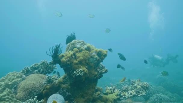 Scuba diver nuotare vicino pesci tropicali e barriera corallina durante immersioni in mare. Operatore subacqueo di immersione subacquea oceano e guardando la vita marina. Immersioni subacquee nel mare turchese. Vita marina, barriera corallina e pesci.