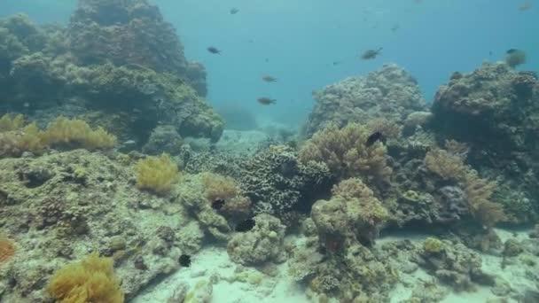 Bella barriera corallina e pesci tropicali nuotare in vista sottacqua di mare. Incredibile barriera corallina, seastar e pesci nelloceano. Guardando il mondo subacqueo e vita marina durante le immersioni in mare. Immersioni in mare.