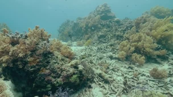 Underwater view coral reef on sea bottom and tropical fish. Beautiful underwater world with colorful coral reef and exotic fish. Marine life and animal. Scuba diving in ocean water.