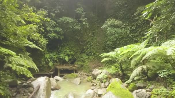 Green tropical forest and rocky river flowing on rocks drone view. River stream in rainforest and old stairs. Wild nature in jungle forest. Tropical river among exotic trees and plant.
