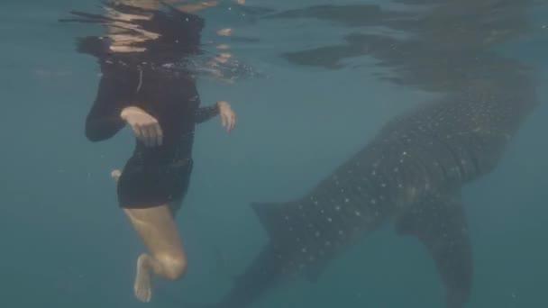 junge Frau mit Schnorchelmaske schwimmt mit wildem Walhai im blauen Meerwasser. Unterwasserschwimmen mit Walhai im offenen Meer. Wildtier in Unterwasserwelt.