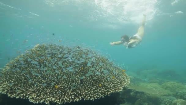 Giovane ragazza nuota sottacqua in occhiali e guardare pesci e barriera corallina nel mare. Donna lo snorkeling nelloceano e alla ricerca di pesci tropicali e barriera corallina delloceano subacqueo.