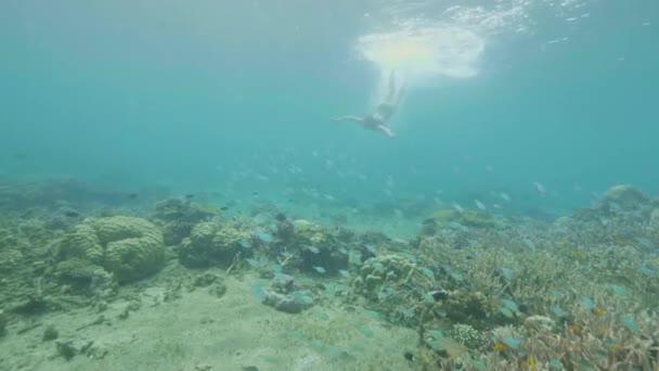 Giovane donna che nuota tra pesci tropicali e barriera corallina nel mare trasparente acqua vista subacquea. Ragazza in occhiali di protezione immersioni nelloceano chiaro per osservare la vita marina.