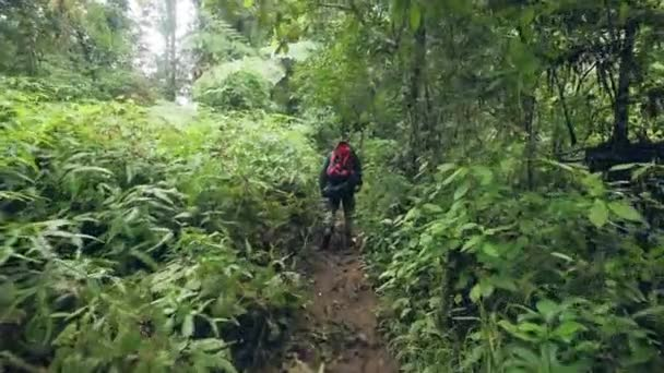 Traveling man with backpack walking on path in tropical forest while travel in wild jungle. Tourist man hiking in tropical forest. Tourism concept.