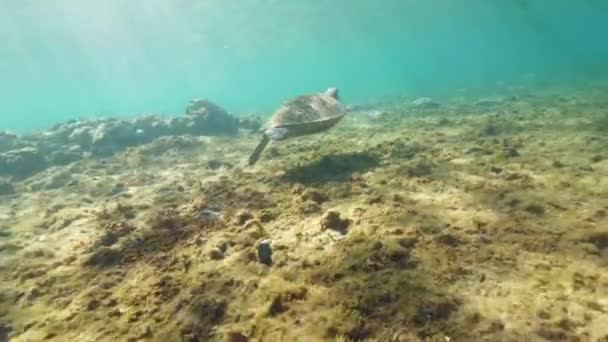 Underwater sea turtle floats away into the distance.