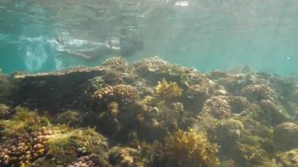 Podvodní pohled na mladou ženu šnorchlování v mořské svatyni.