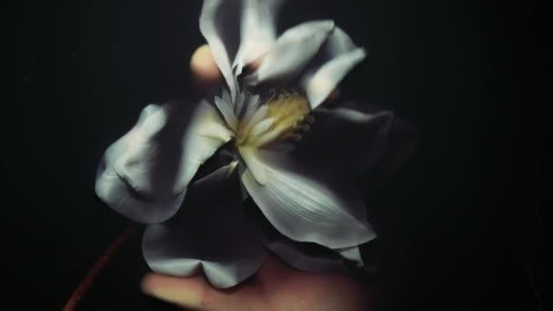 White Artificial Flower Black Water White Flower Arises Darkness