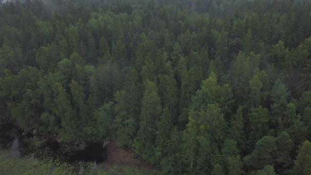 Letecký průzkum Mon Repos park ve starém Vyborg, Rusko, Monrepos Severní záběry. Letecké záběry lesní panoramat mlha hustá Severní Les, Ostrov mrtvých Mon Repos park. letecké video jehličnanů, borovice