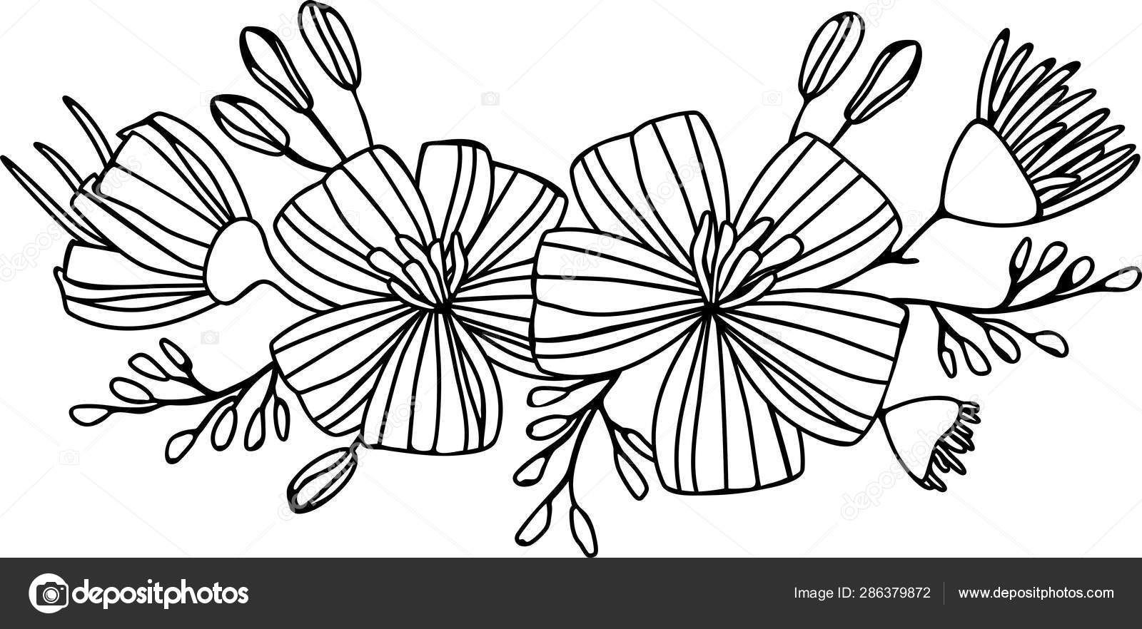 Bouquet De Marguerites Illustration Vectorielle Dessin