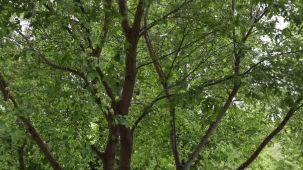 grünes Laub der Bäume, im Wind schwankende Äste