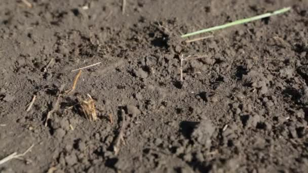 Ants crawling in the anthill