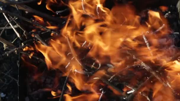Tűzifa égett a tüzet. A láng nyelve