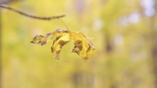 The wind stirs a yellow leaf on a branch in the autumn forest on a blurred background