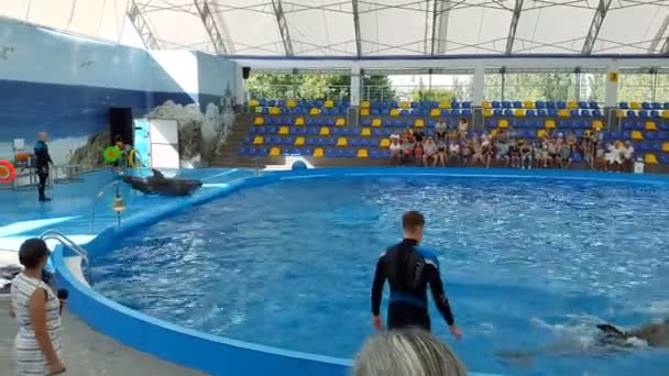 Odessa, Ukraine - August 2017: Dolphins play in the Dolphinarium. Representation in the Dolphinarium. Show of dolphins.