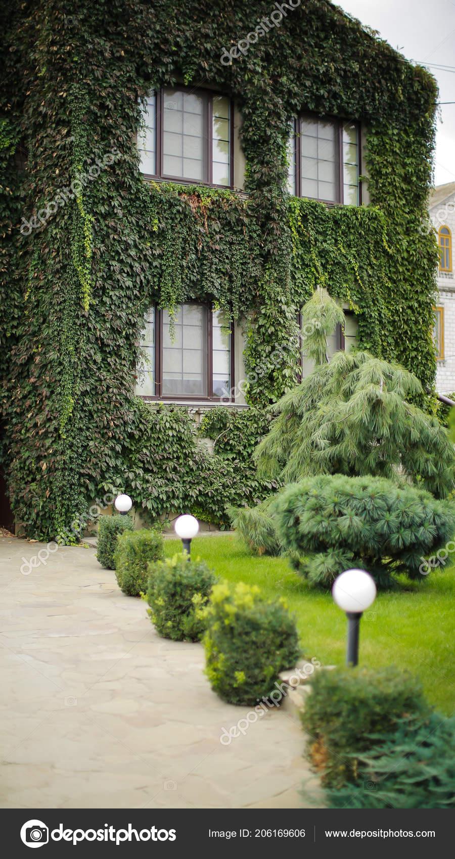 Moderne Maison Couverte Lierre Vert Maison Campagne