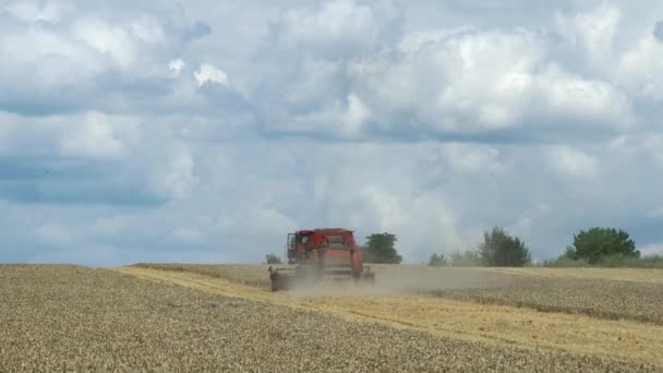 Combine harvester during grain harvesting. Harvest time. Agricultural sector