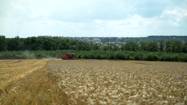 Kombinovat kombajn sklizeň zralého obilí na farmě. Zemědělský sektor