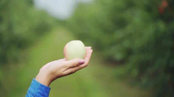 Nő kezében egy almát. Szedés érett bio Alma gyümölcsös
