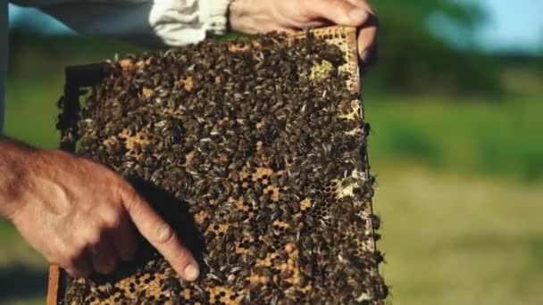 Ruka včelař pracuje s včely a včelstva na včelařství. Včely na medových plástech. Snímky z včelího úlu