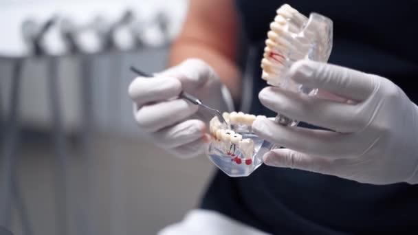 Zubař drží umělou čelist v zubní ordinaci. Doktor v rukavicích ukazuje zuby pomocí lékařského nástroje na čelistní hraně. Detailní záběr.
