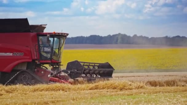 Modern combine harvester on the field. Red agricultural machine harvesting crop in the beautiful rural landscape in summer. Agronomy concept.