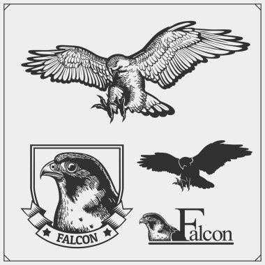 Falcon emblems and design elements for sport club. Print design for t-shirts.