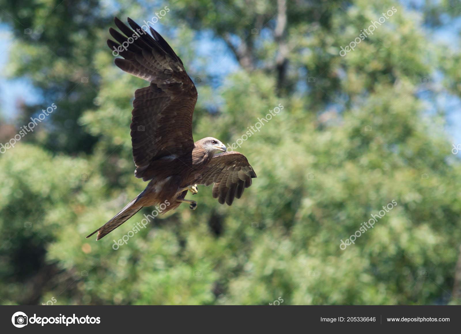 μεγαλύτερο πουλί Γυναικία ολοκλήρωση με dildo