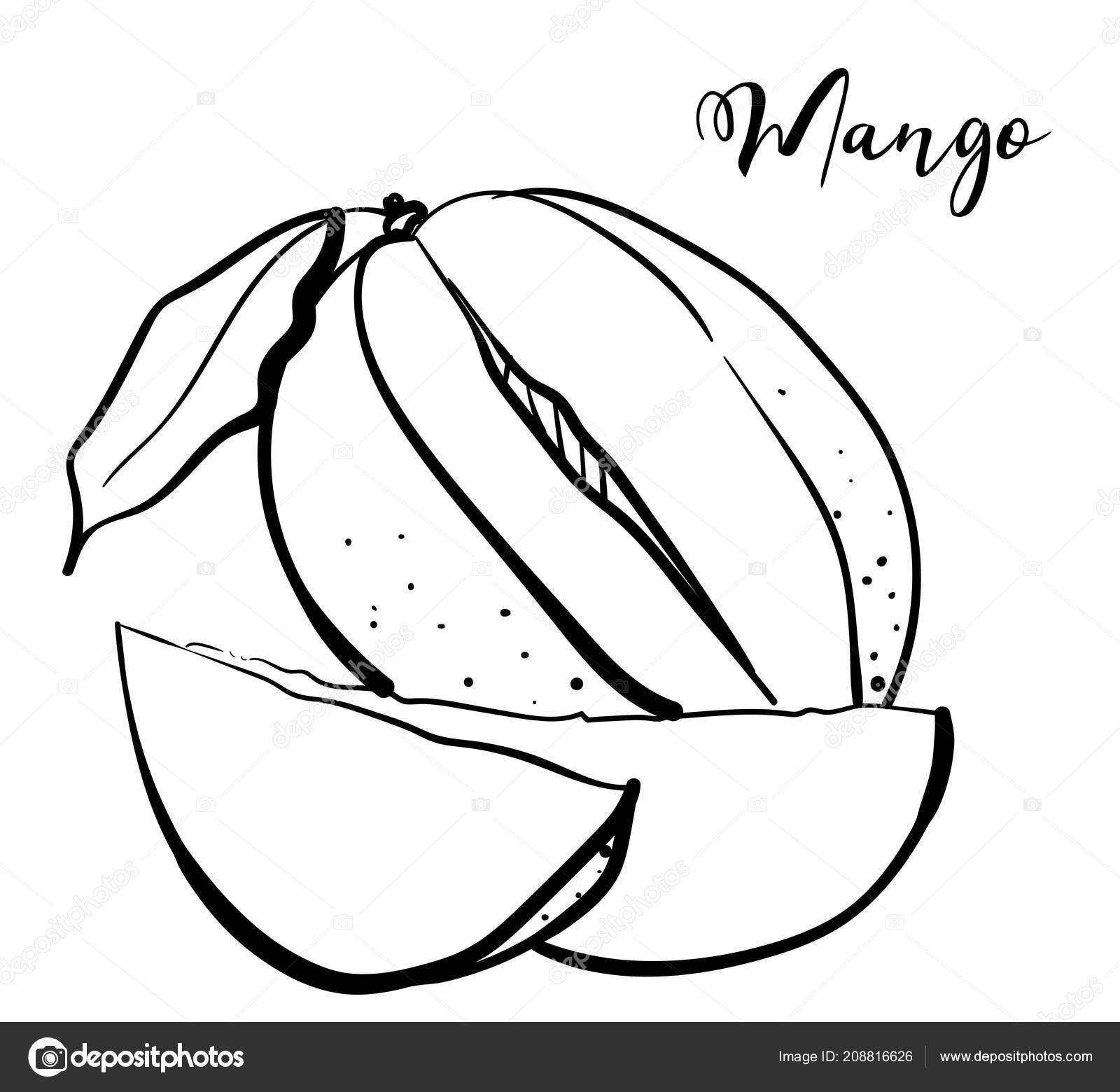 A mango sketch black and white vector illustration of exotic fruit vector by darina wkgmail com