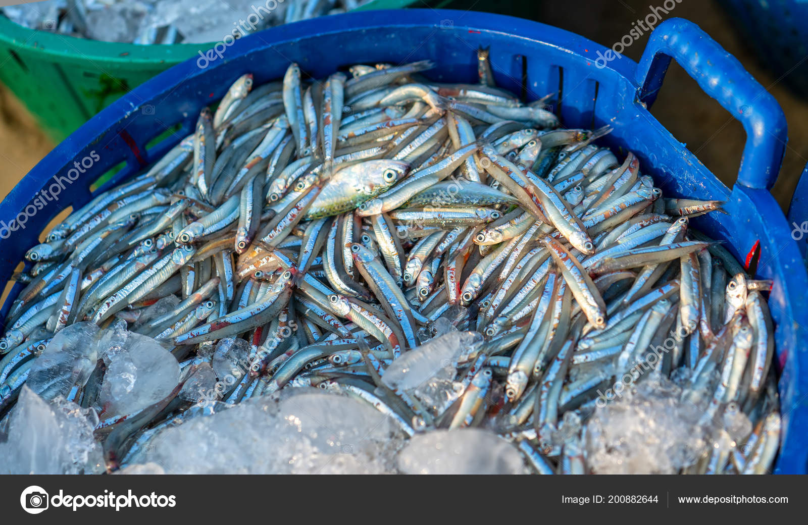 Anchovy Catch Sold Seafood Market Fish Used Make Fish Sauce
