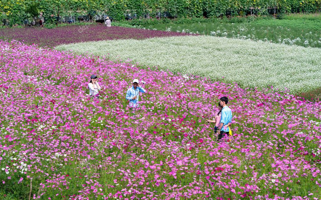 Tien Giang, Vietnam - February 12th, 2018: Garden flowers ecology with many flowers colorful to attract more tourists, photographs travel morning Lunar New Year in countryside Tien Giang, Vietnam
