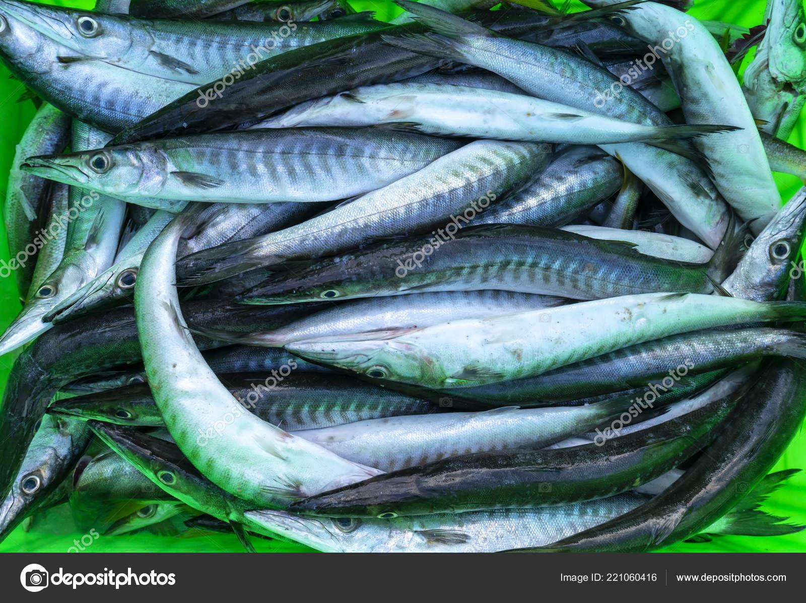Pesci Del Barracuda Fresco Nei Mercati Pesce Questa Specie Vive