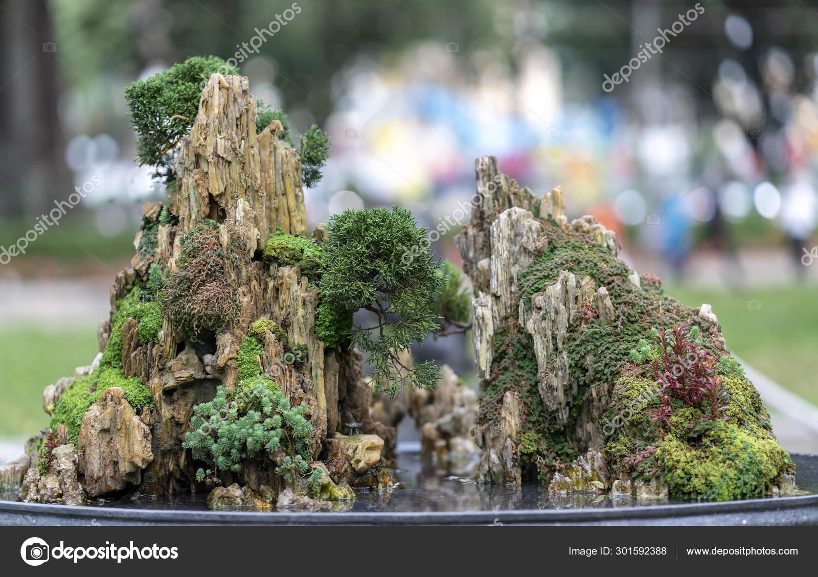 Bonsai Penjing Miniature Tray Say Human Life Must Strong Rise Stock Photo C Huythoai1978 Gmail Com 301592388