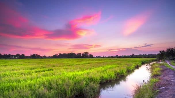 Západ slunce nad rýžovými poli v období sklizně v klidné krajině