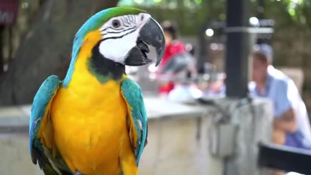 Papouška Macawa hladí lidská ruka jako přítele. To je pták, který je domestikovaný a vychovávaný v domě.