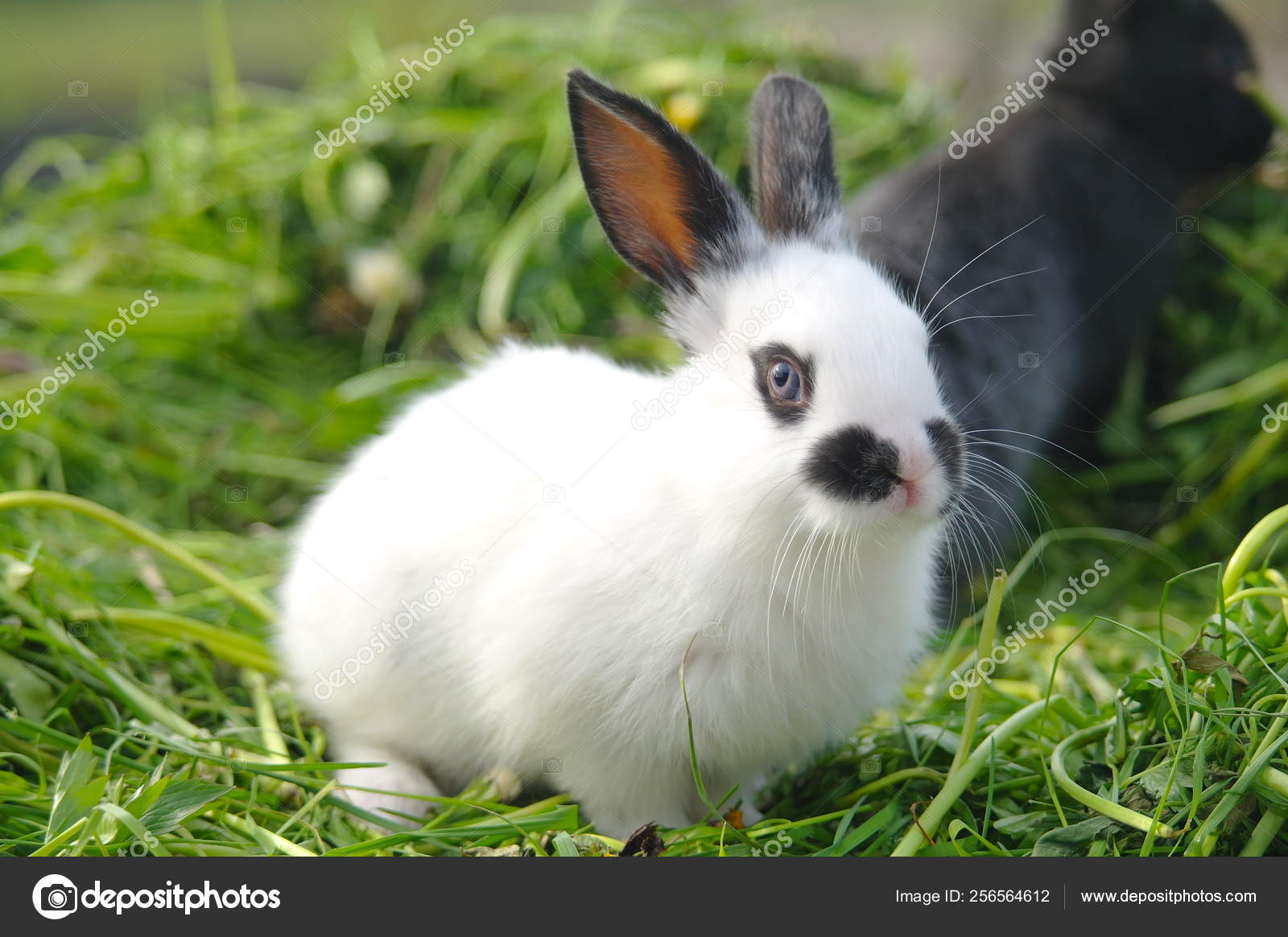 White and black rabbits on the grass. closeup