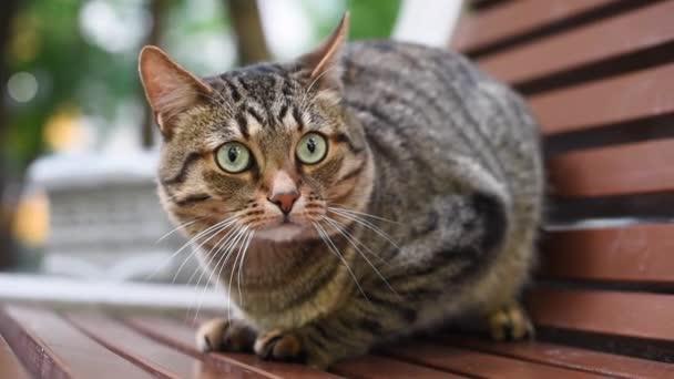schöne gestreifte Katze, die auf der Straße läuft