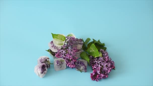 blooming lilac frozen in ice cubes on a blue background, skin care with ice