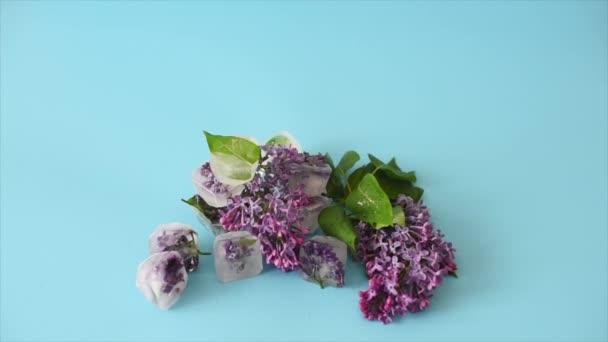 kvetoucí šeřík zamrzlý v kostkách ledu na modrém pozadí, péče o pleť s ledem